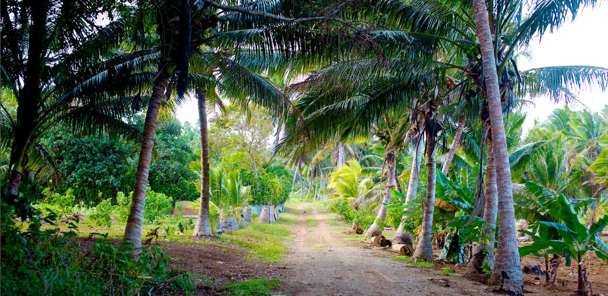 travel-palmtree+jungle-road