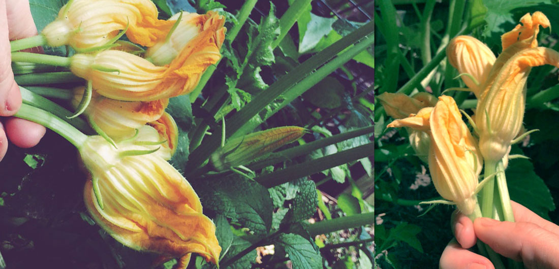 how to cook squash blossoms, recipe